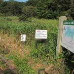 犬挟り湿地保護のための草刈を行いました