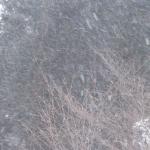 午後は吹雪