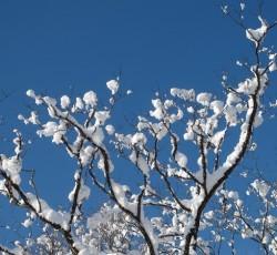 21木に雪景色