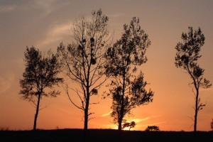 鳩ヶ原の夕日