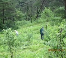7月14日三平山ログハウス付近草刈りIMG_0227