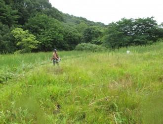 明連湿地:木道が整備しておりスニーカーなら濡れずに一周可能です