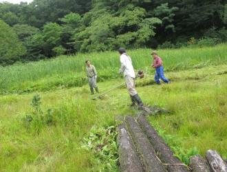 明連湿地:後ろは姫蒲の栽培地