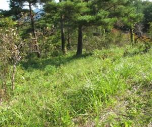 三平山登山ロ:草刈り前