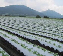 大根畑と蒜山三座(百合原)