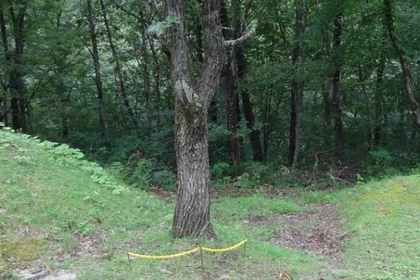 木の根元に2かたまり