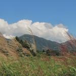 【ひるぜん日記】蒜山で今見ごろの草花をご紹介します