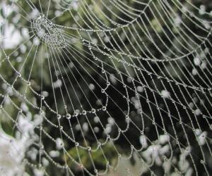 蜘蛛の巣の水玉