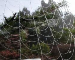 霧の朝の贈り物(蜘蛛の巣に水玉)