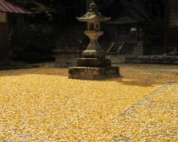 銀杏の落ち葉(茅部神社)