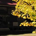 【ひるぜん日記】秋の訪れ
