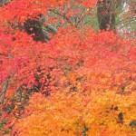 【ひるぜん日記】晩秋の蒜山へ