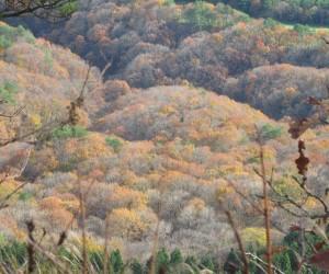 ミズナラ・コナラの森(三平山登山道)