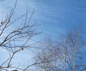 木守柿とイワシ雲