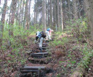 登山道階段近くのササ除去
