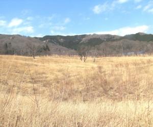 3月27日山焼き前の蒜山の草原