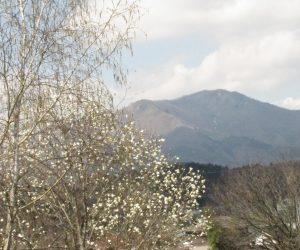 4月11日 コブシと上蒜山