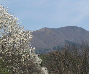 4月16日 上蒜山の残雪