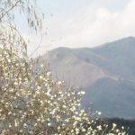 【ひるぜん日記】 4月中旬(4月11日~4月20日)