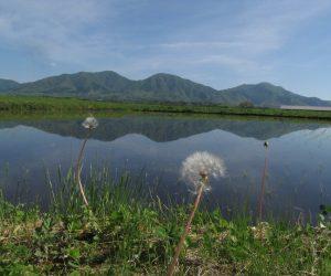 5月13日 蒜山三座 茅部野にて撮影、6月中旬になると稲が育って山がきれいに見えなくなります