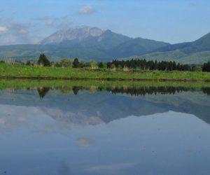 5月13日 大山、烏ヶ山 茅部野にて撮影、6月上旬まで撮影できます