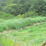【保全活動】犬挟り湿地草刈り