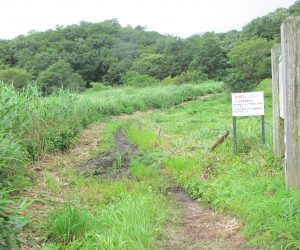 【草刈後の登山道】左側も湿地ですが手が回らないのでご覧のとうり原野です。