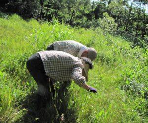 11 日 天谷湿地、湿地観察会