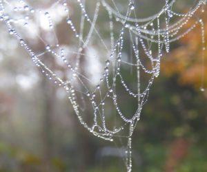 11/12 真珠のネックレス 蜘蛛の糸に霧がついて水玉が出来ました