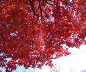 11/12 徳山神社の紅葉