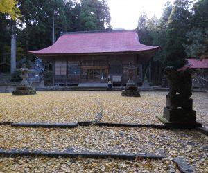11/12 茅部神社 銀杏の落ち葉
