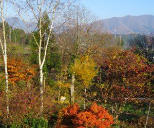 11/20 茅部野の紅葉と上蒜山
