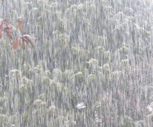 12 /24  水雪  水分をたっぷり含んでまっすぐに落ちてきます、この雪が降ると電線が切れたり杉やヒノキがイナバウワー、落葉樹さえ枝だ折れや倒木が出ます。