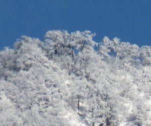 12 /30  上蒜山山頂の樹氷  茅部野より