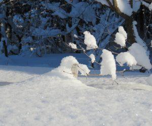 1/25 積雪12㎝ メジャーは125㎝まで 13年間の最高積雪
