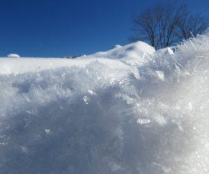 1/26 雪の霜柱 白樺の丘付近にて