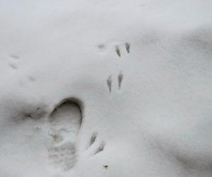 2/1 ネズミの足跡