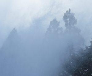 2/10  ホワイトアウト寸前 50mほど先の杉林が見えなくなってきた、吹雪ではありません。