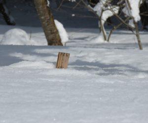 2/12  積雪120㎝  最高積雪は135㎝でした