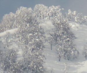 2/12  上蒜山山頂  山頂のブナ林に着雪 茅部野より撮影
