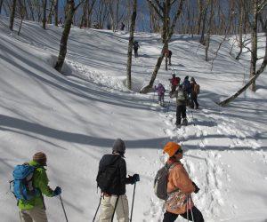 【スノーシュー巨木探索ツアー】 第一の谷を超える
