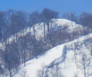 2/28 上蒜山三角点付近 1199.7m  茅部野より 三角点はブナなどに囲まれ展望は望めません