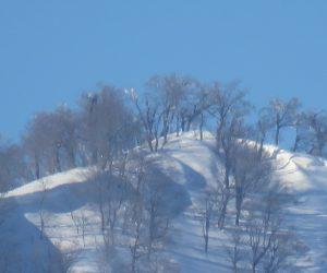 2/28 上蒜山 1202m  茅部野より ブナが大部少なくなってに頻回側に展望が効くようになりました