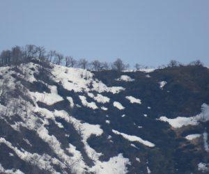 4/10 上蒜山山頂尾根の残雪