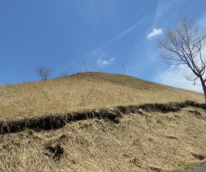 4/16 鳩ヶ原 山焼きをするとこの枯れ草の山が黒く変身、暖かい雨が数回降ると緑に変身。