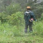 【保全活動】三平里山草刈りを実施しました