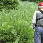 【保全活動】犬挟湿原草刈りを行いました