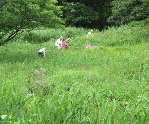 犬挟湿原草刈り