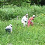 【募集】9月8日犬挟(いぬばさり)湿原の保全活動を一緒にしませんか?