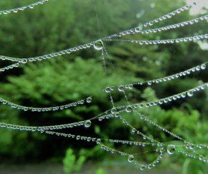 9/10 蜘蛛のネックレス